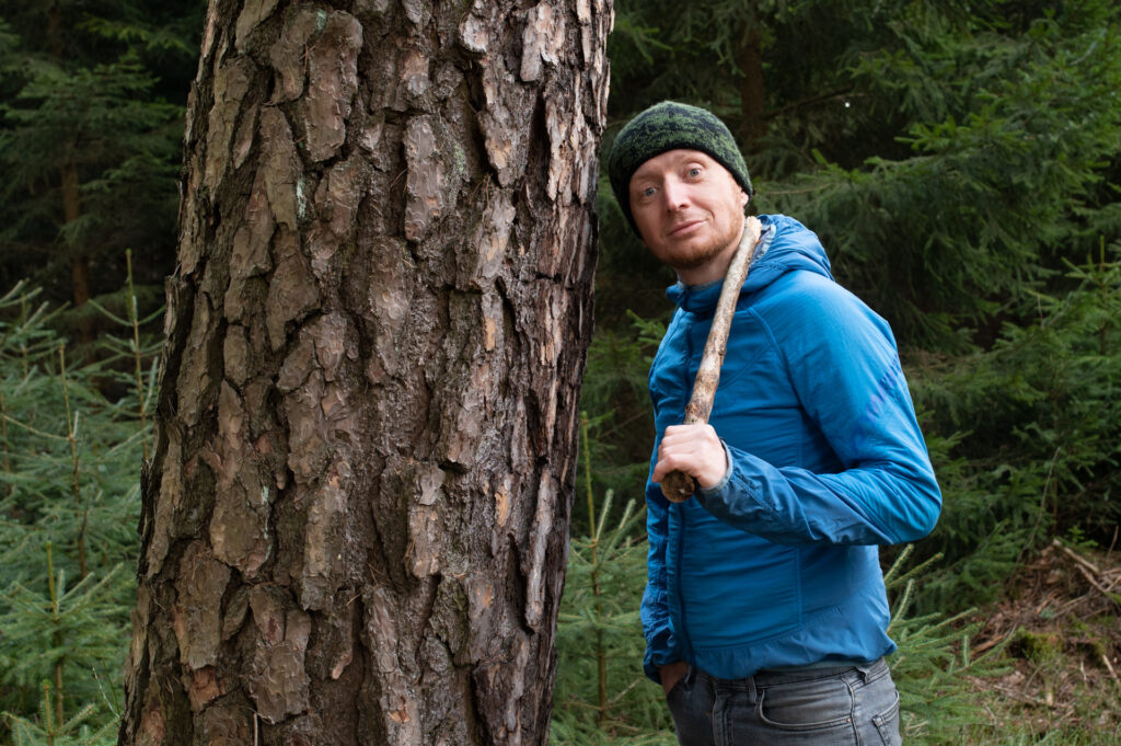 pokroj drzew